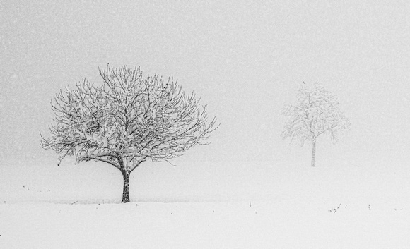 the snow and two trees