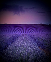 dawn in Valensole