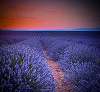 sunset in Valensole