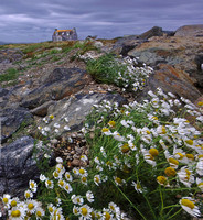 house of the daisies, South Uist